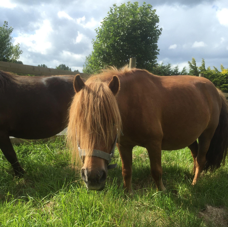 chevaux camping Seasonova le Riva Bella