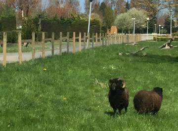 Mini ferme à Ouistreham Riva-bella