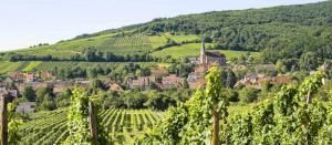 vacances routes des vins d'Alsace