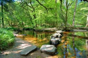 Balade en forêt Aquarev